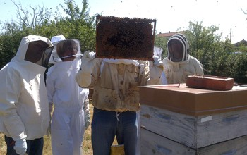 Stages initation à l'apiculture 2014