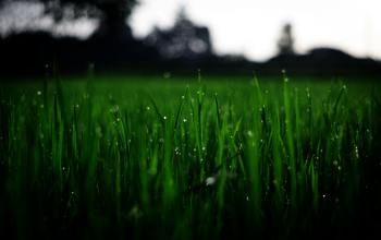 Shallow-focus-photography-of-green-grasses-during-daytime-212324